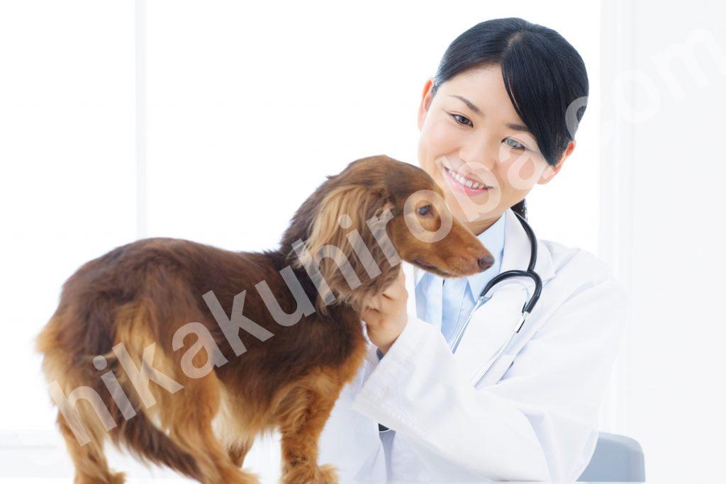 獣医師 資格