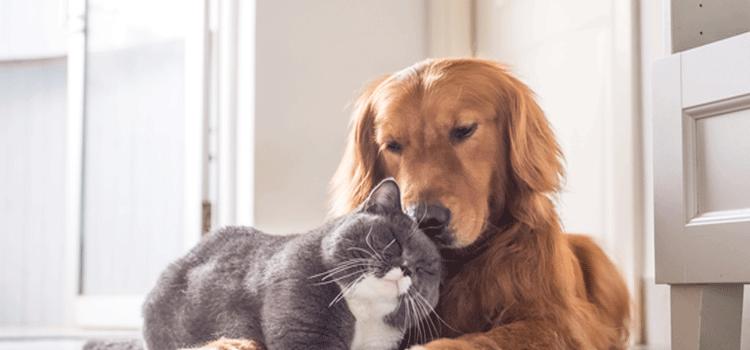 ペット介護士 難易度