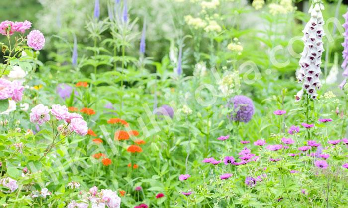 園芸装飾技能士
