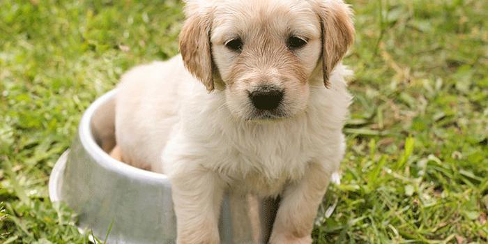 エサ入れに入る子犬