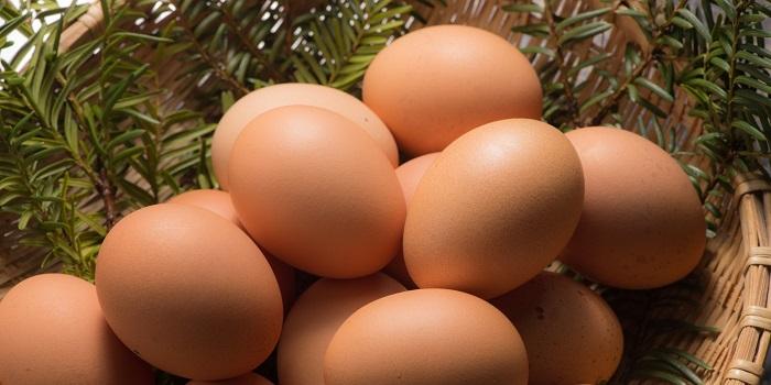 食生活アドバイザーに選ばれし卵たち